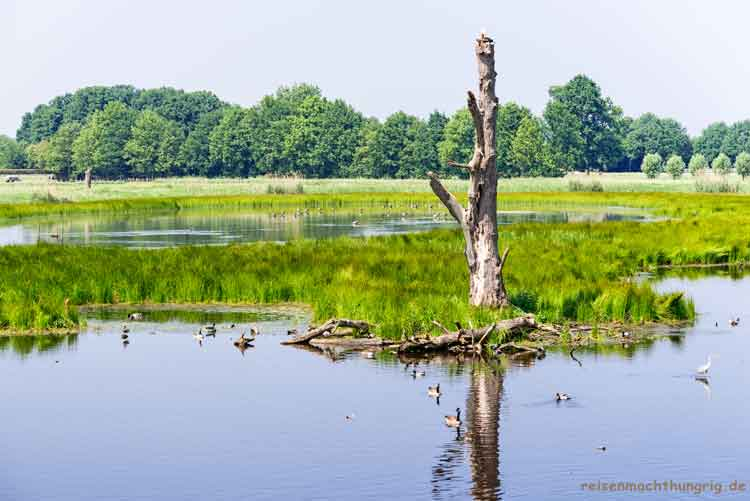Landschaftsaufnahme Gewässer