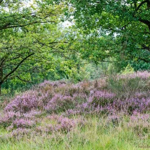 Wahner-Heide, Teil 2