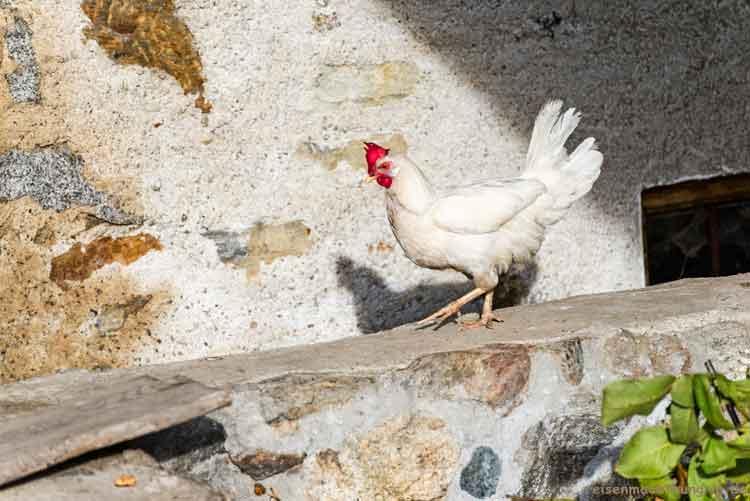 Huhn geht