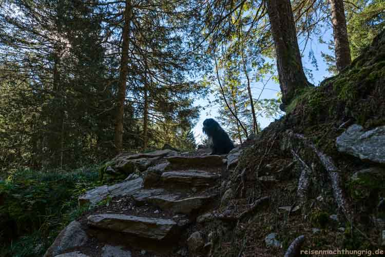 Stufen mit Hund