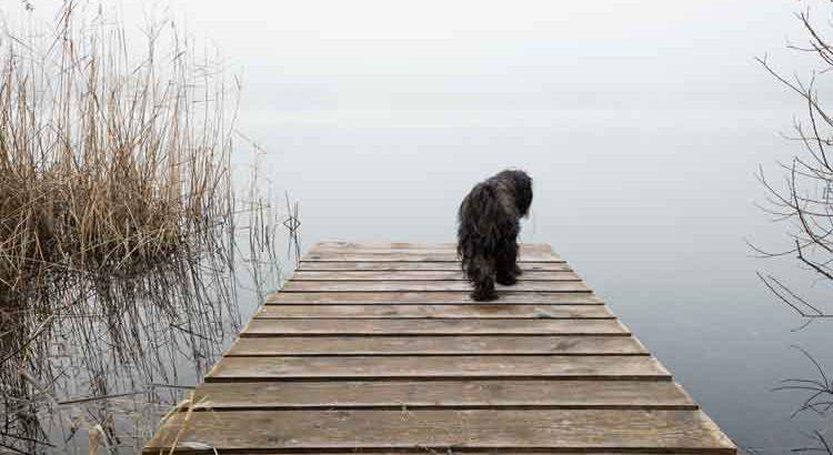 Hund auf Steg