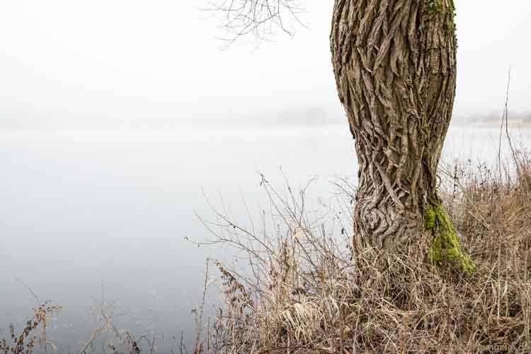 Baum am Maar