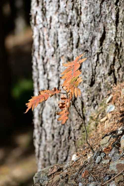 Junger Baum
