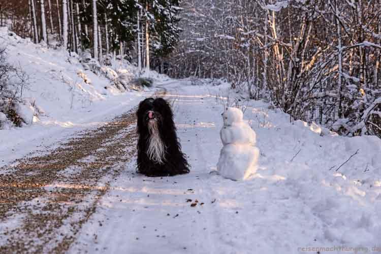 Hund mit Schneemann