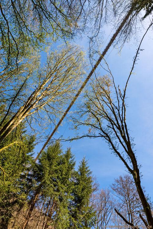 Geierlaybrücke furch Bäume fotografiert
