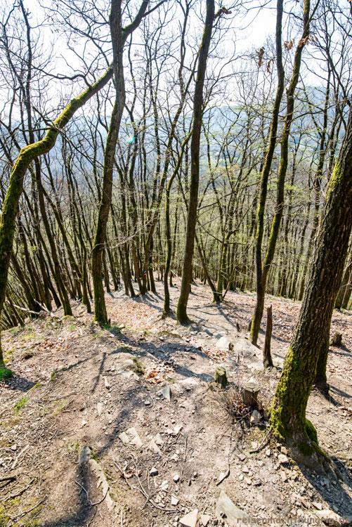 Steiler Auf-bzw. Abstieg auf den Kolfenberg