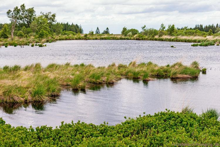 Wasserfläche im Hohen Venn