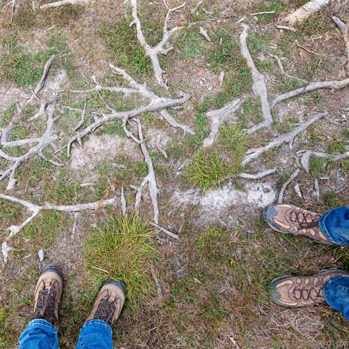 Wandern im Hohen Venn - Wurzelwerk