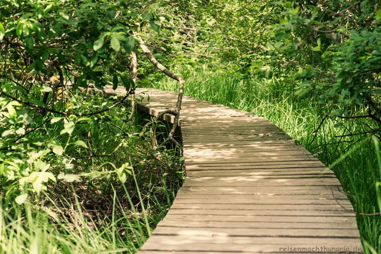 Wandern im Hohen Venn - Steg