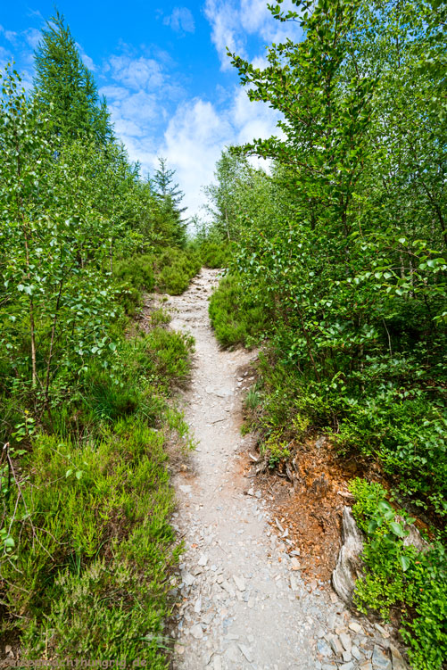 Wandern im Hohen Venn - ein Weg