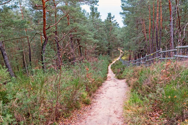 Tennenloher Forst- Spaziergang