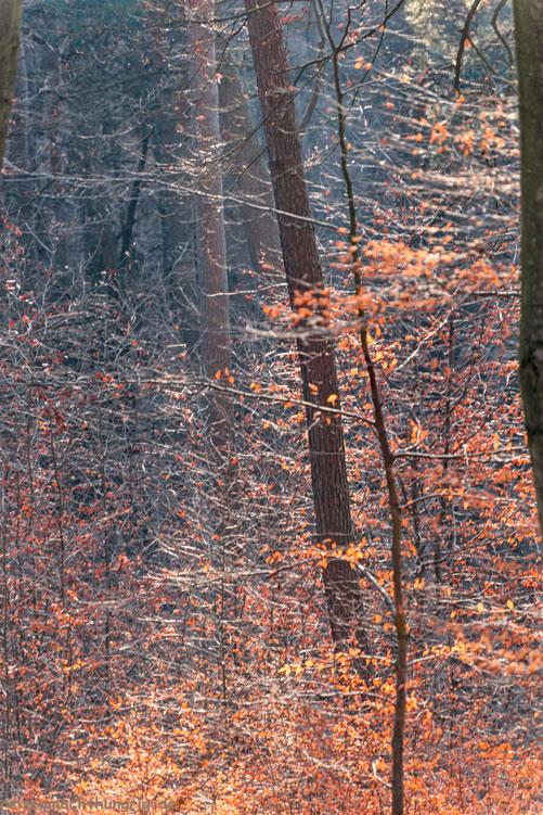 Winterwald auf dem Ebberg