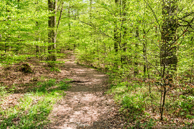 Frühlingshafter Wald