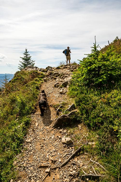 Mann von hinten fotografiert mit Smartphone den Schwarzwald
