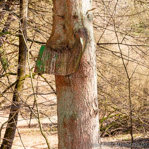 Baum frisst Blechschild