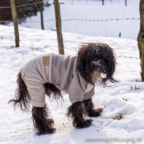 Tibet Terrier im Schneeanzug