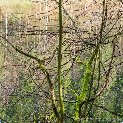 Winterlicher Baum moosbewachsen