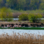 Zwillbrocker Venn - Rosa Flamingos im Münsterland