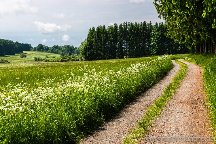 Spazierweg in der Teuschnitz-Aue