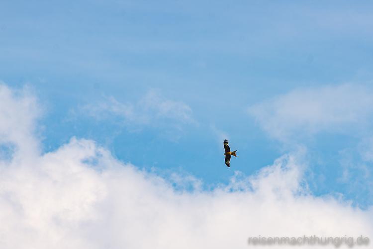 Milan fliegt am Himmel