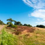 Heide-Hügel-Herbst - Traumpfad Wacholderweg